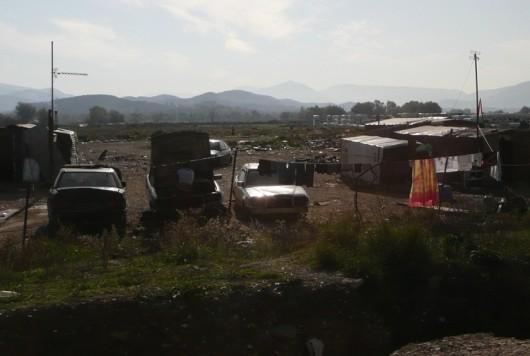 Huonompikuntoisia yksilöitä eteläisessä Albaniassa.