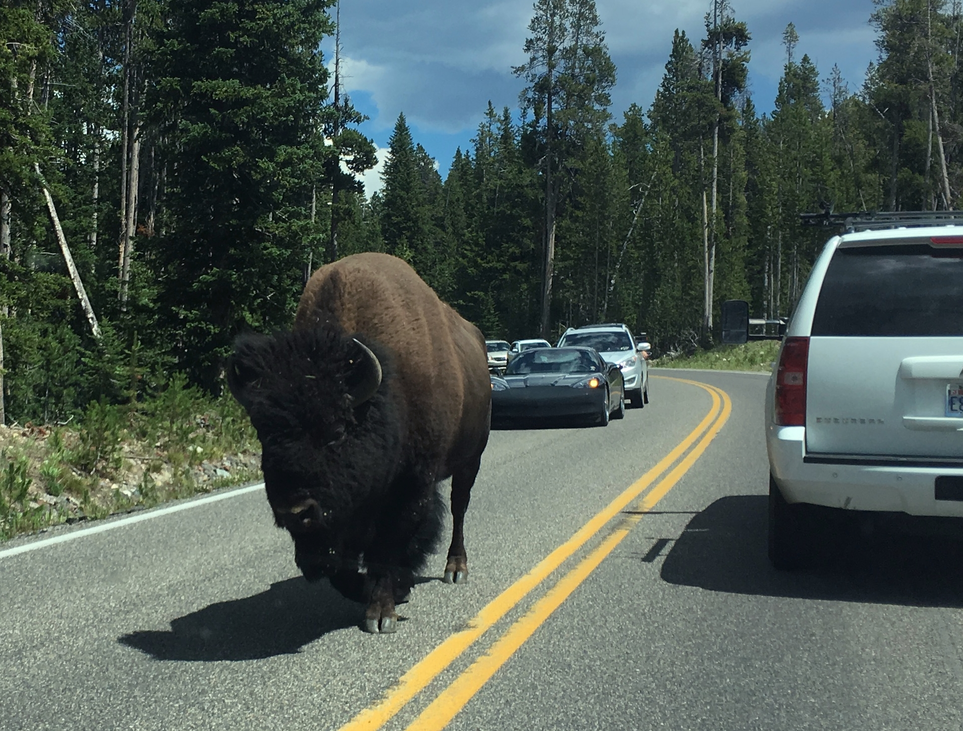 Yellowstone – biisoneita, karhuja, susia sekä retkisuihkusta ja muista tielläliikkujista